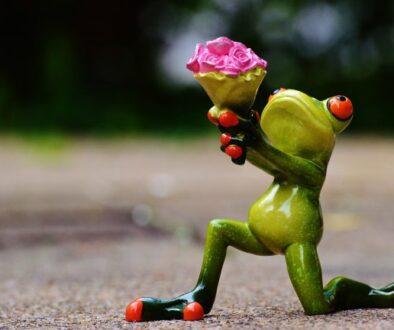 i-beg-your-pardon frog